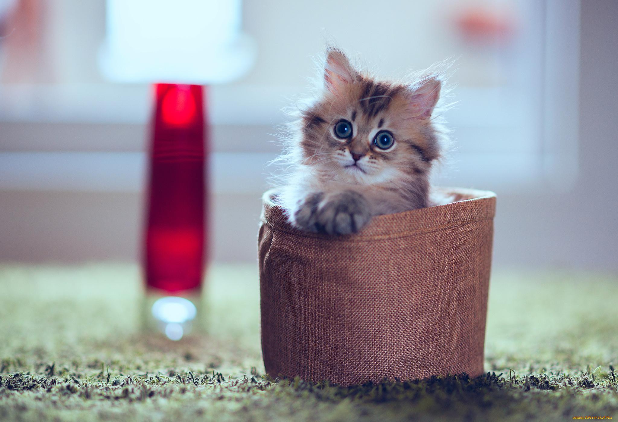 этот фотки котята милые более